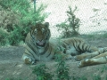 Safari (9) (800x600).jpg